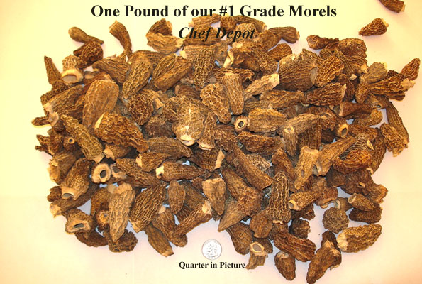 #1 Grade Dried Morel Mushrooms, Extra Clean, Hand Picked in the USA
