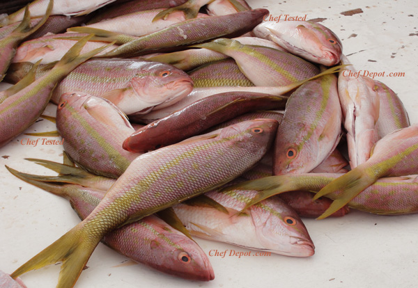 yellowtail red snappers